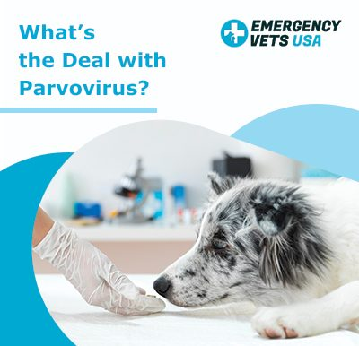 What's The Deal With Parvovirus