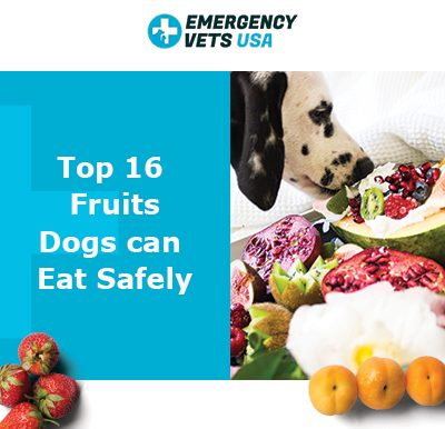 16 Fruits Dogs Can Eat Safely