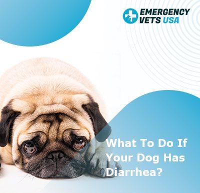 Dog has diarrhea