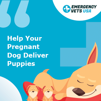 Help Your Pregnant Dog Deliver Her Puppies