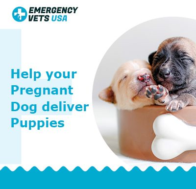 Help Your Pregnant Dog Deliver Puppies
