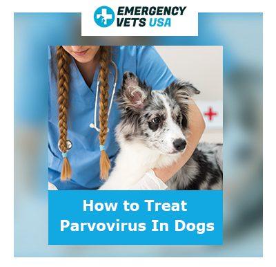 How to treat parvovirus in dogs