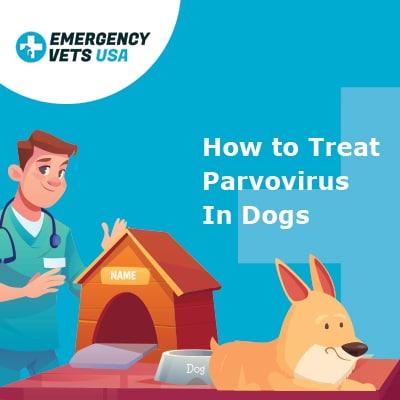 Treat Parvovirus In Dogs