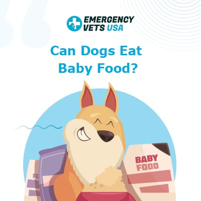 Can Dogs Eat Baby Food