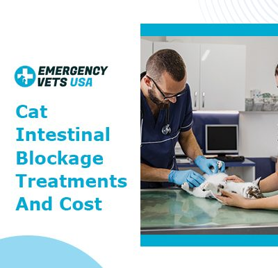 Cat Intestinal Blockage Cost and Treatments