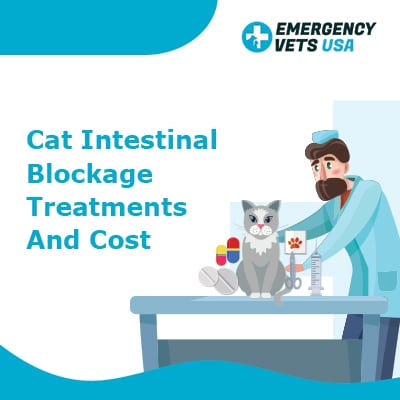 Cat Intestinal Blockage Treatments and Cost