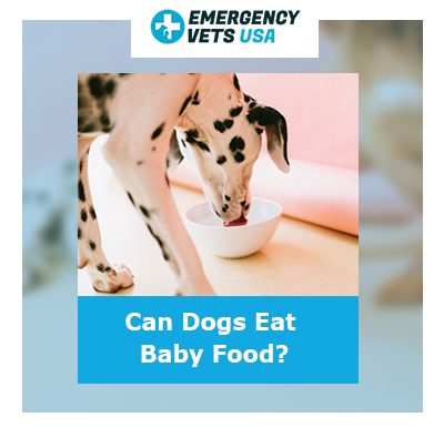 Dogs Eat Baby Food