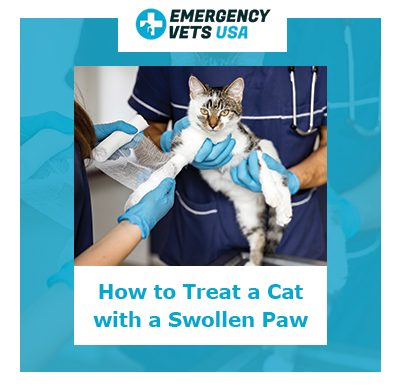 How To Treat A Cat With A Swollen Paw
