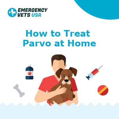 How To Treat Parvo At Home Remedies