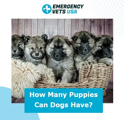 Number of puppies can dogs have