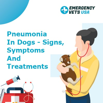 Pneumonia in dogs, signs, symptoms and treatments