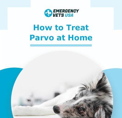 Treating Parvovirus at Home