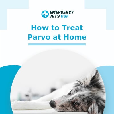 Treating Parvovirus at Home