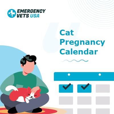 Cat Pregnancy Calendar