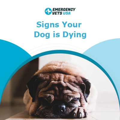 Top 9 Signs Your Dog Is Dying What To Do And What To Expect