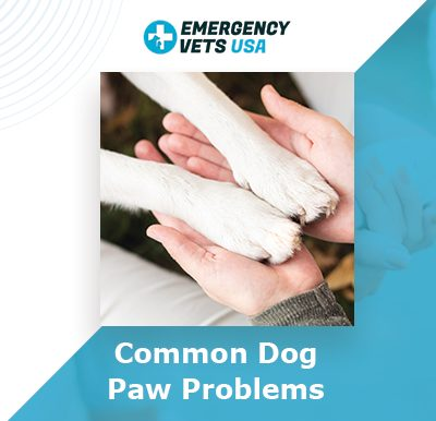 Dog Paw Problems To Watch For