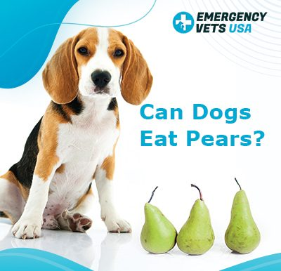 Dogs Eat Pears