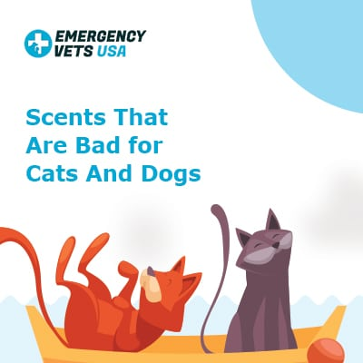 Scents That Are Bad For Cats And Dogs