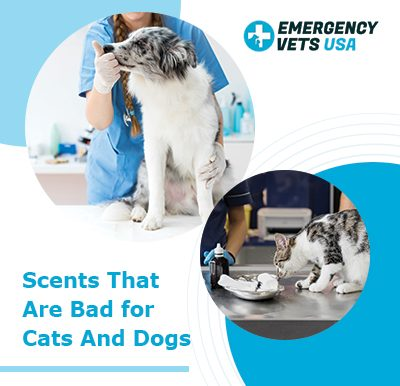 Scents bad for cats dogs