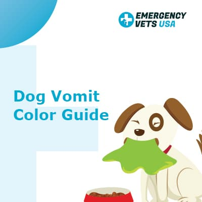 Dog Vomit Color Guide | What Do The