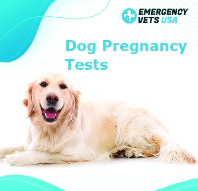 Canine Pregnancy Tests