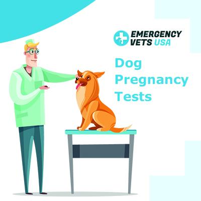 Dog Pregnancy Tests