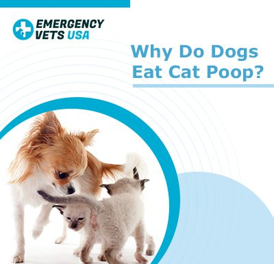 Dogs Eating Cat Poop