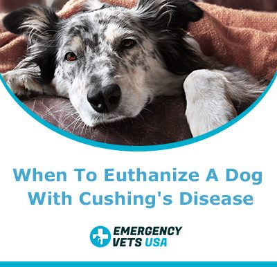 Euthanize A Dog With Cushings Disease