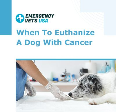 Euthanize a dog with cancer