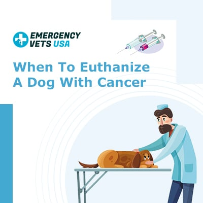 When To Euthanize A Dog With Cancer