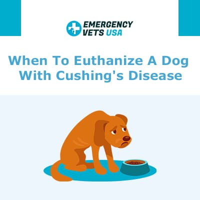 When To Euthanize A Dog With Cushings Disease