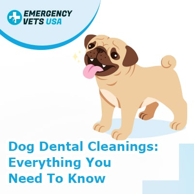 Dog Dental Cleanings