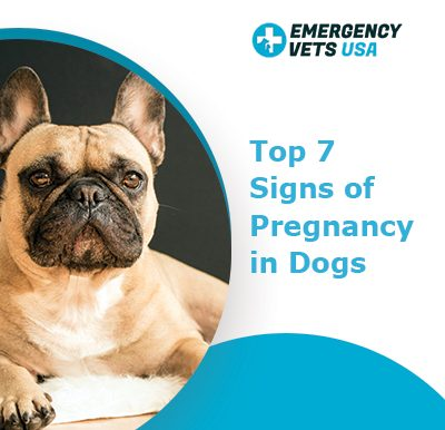 Signs of Pregnancy in Dogs