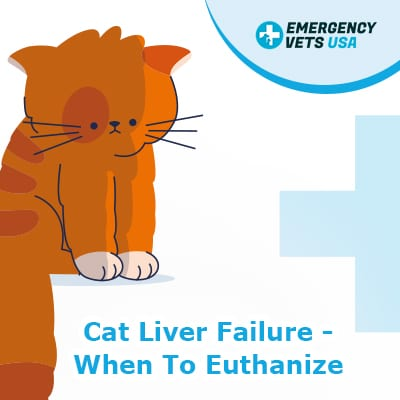 When To Euthanize A Cat With Liver Failure