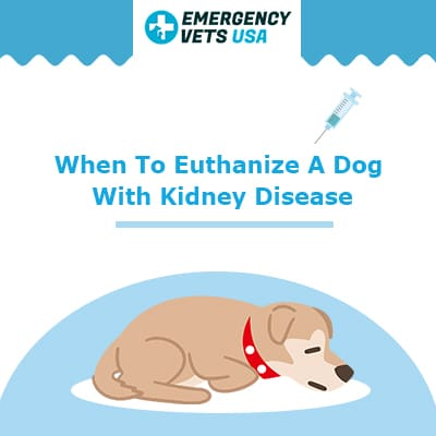 When To Euthanize A Dog With Kidney Disease Making The Hard Choice