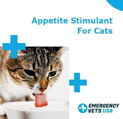 Appetite Stimulant For Cats