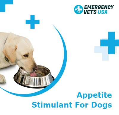 Appetite Stimulant For Dogs