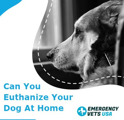 Can You Euthanize Your Dog At Home