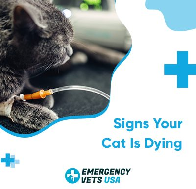 Cat Is Dying