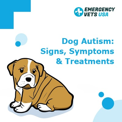 Dog Autism Signs