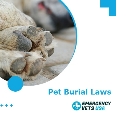 Pet Burial Laws | Is It Legal To Bury Your Dog In Your ...
