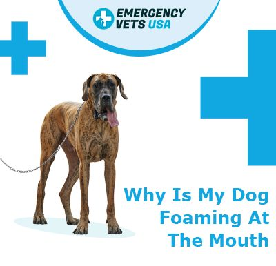 Dog Foaming At The Mouth
