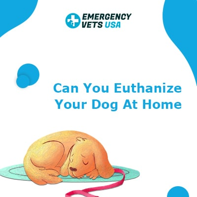 Euthanize Your Dog At Home