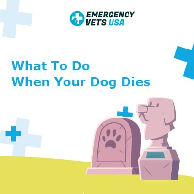 What To Do When Your Dog Dies