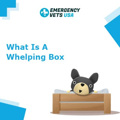 What is a Whelping Box