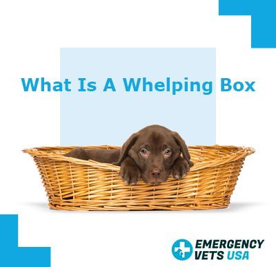 Whelping Boxes
