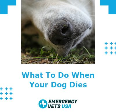 When Your Dog Dies