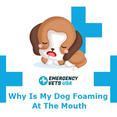 Why Is My Dog Foaming At The Mouth