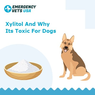 Xylitol And Why Its Toxic For Dogs