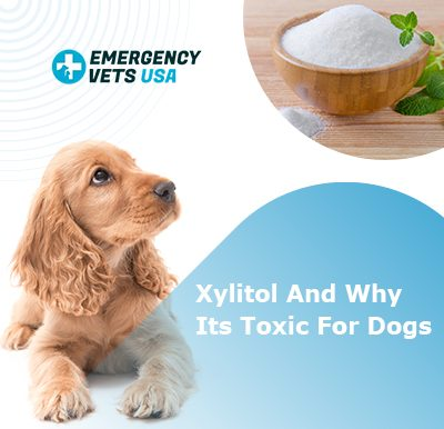 Xylitol Toxicity For Dogs